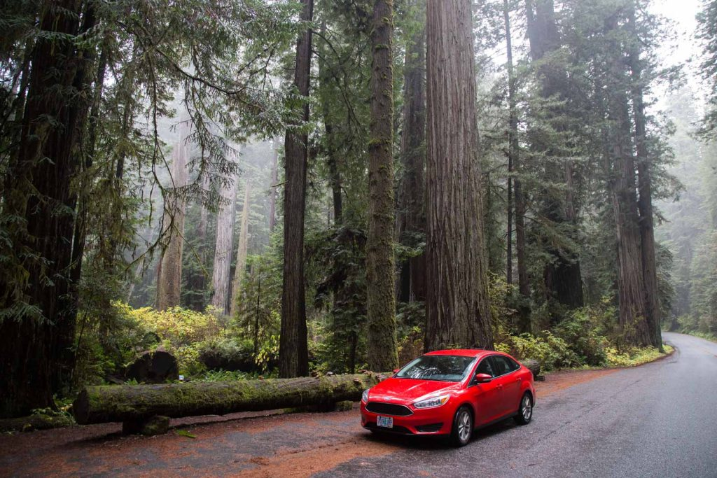 Roadtripping through Redwoods, West Coast USA