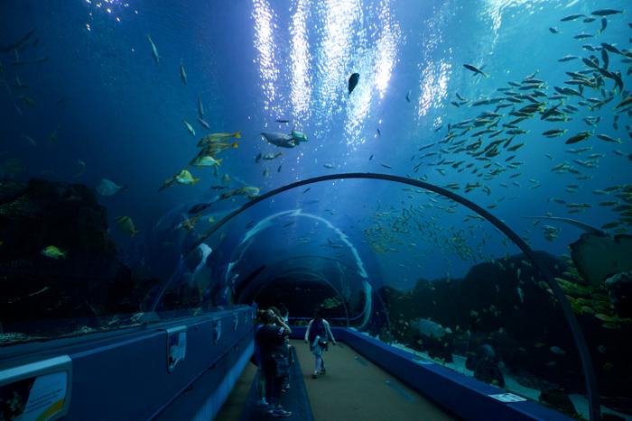 Atlanta Aquarium - Ocean Voyager Experience